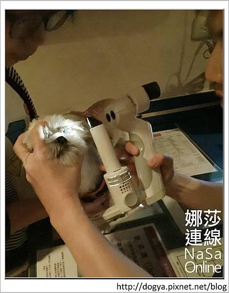 台北眼科遠見動物醫院眼科漸進性視網膜退化2015-09-12 13.05.33.jpg