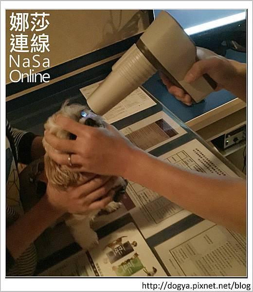 台北眼科遠見動物醫院眼科漸進性視網膜退化2015-09-12 13.09.33.jpg