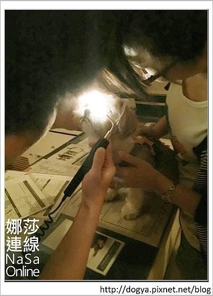 台北眼科遠見動物醫院眼科漸進性視網膜退化2015-09-12 12.25.35.jpg