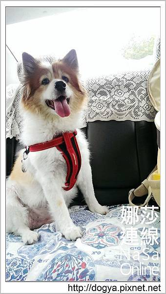 台南奇美博物館_遛狗散步_娜莎連線.33.jpg