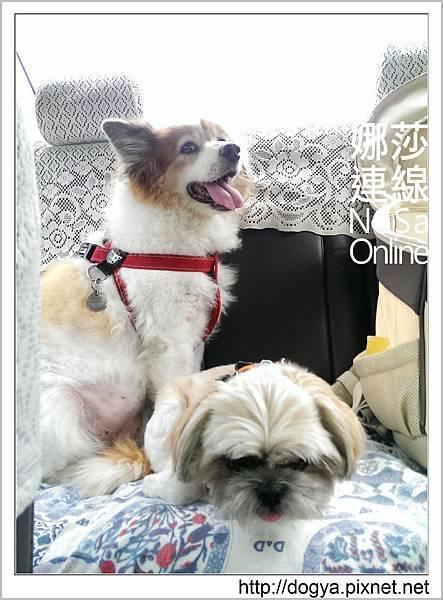 台南奇美博物館_遛狗散步_娜莎連線.35.jpg