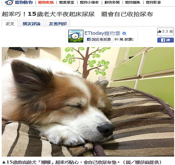 超乖巧!15歲老犬半夜起床尿尿 還會自己收拾尿布