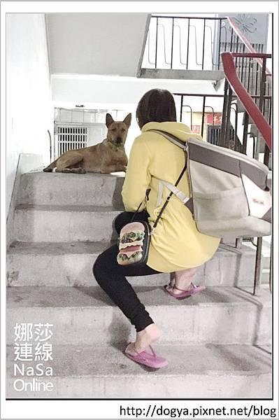 娜莎連線手工寵物零食舖-浪狗小黃送養認養領養01.jpg