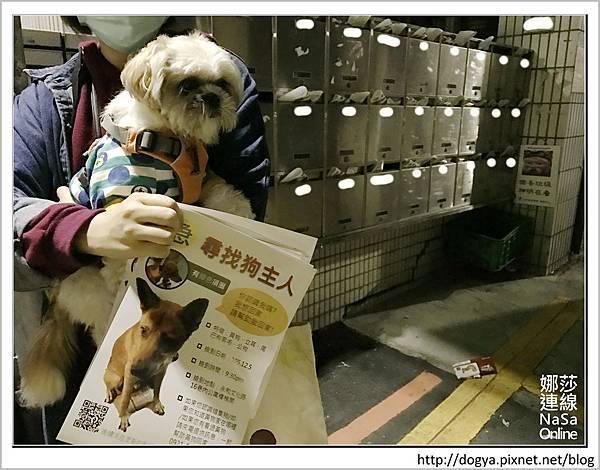 娜莎連線手工寵物零食舖-浪狗小黃送養認養領養09.jpg