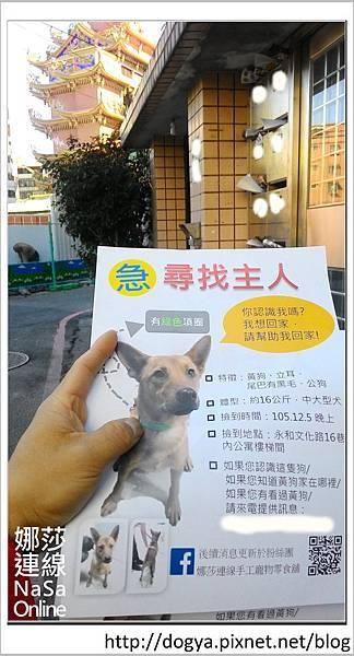 娜莎連線手工寵物零食舖-浪狗小黃送養認養領養14.jpg