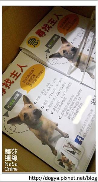 娜莎連線手工寵物零食舖-浪狗小黃送養認養領養17.jpg