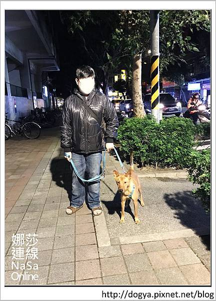 娜莎連線手工寵物零食舖-浪狗小黃送養認養領養20.jpg