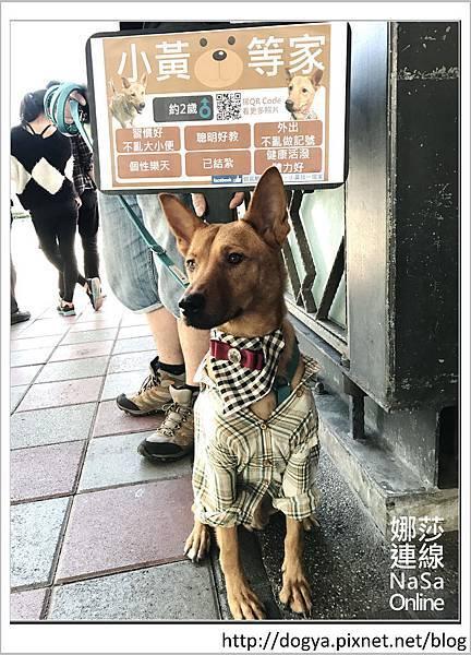 娜莎連線手工寵物零食舖-浪狗小黃送養認養領養25.jpg