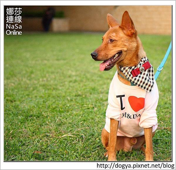 娜莎連線手工寵物零食舖-浪狗小黃送養認養領養43.jpg