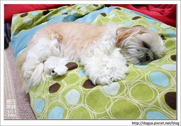 nEO_IMG_nEO_IMG_寵物睡鋪娜莎連線手工寵物零食舖_dijjo_方吐司睡墊_寵物床_六腳福利社02.jpg