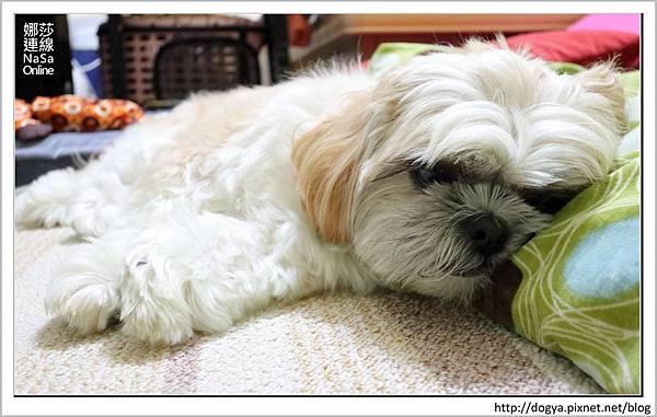 nEO_IMG_nEO_IMG_寵物睡鋪娜莎連線手工寵物零食舖_dijjo_方吐司睡墊_寵物床_六腳福利社04.jpg