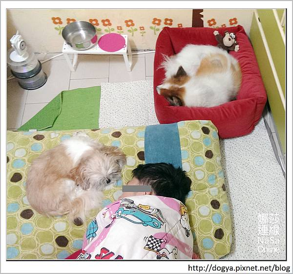 nEO_IMG_寵物睡鋪娜莎連線手工寵物零食舖_dijjo_方吐司睡墊_寵物床_六腳福利社nEO_IMG_2015-12-08 09.06.40-1.jpg