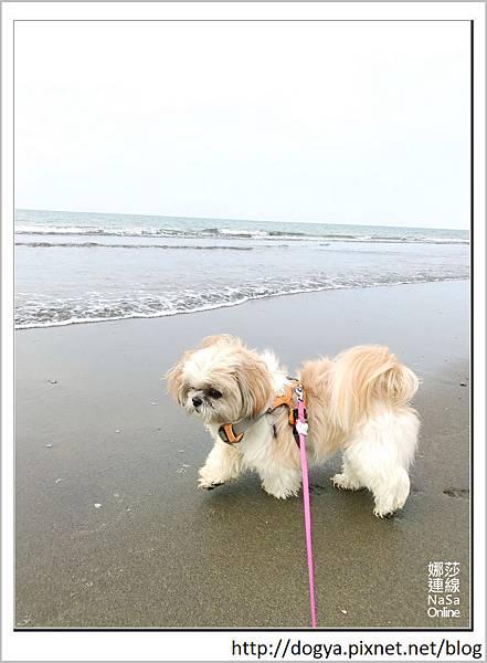 娜莎連線手工寵物零食舖_白沙岬燈塔_桃園觀音海水浴場03.jpg