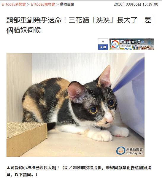 娜莎連線_救援流浪貓1