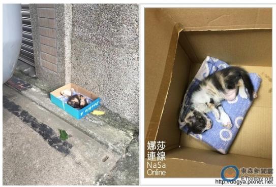 娜莎連線_救援流浪貓泱泱4