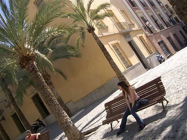 椰子樹看起來好熱帶