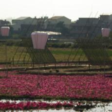 flowersea.jpg