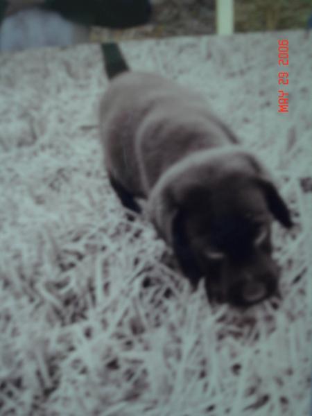 太極狗狗2個多月大