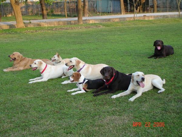 左=摸摸、皮卡丘、曼妮、呆呆、吐司、太極、叮噹貓 右上=酷瑪