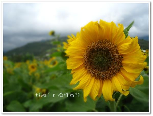 IMG_6346.jpg