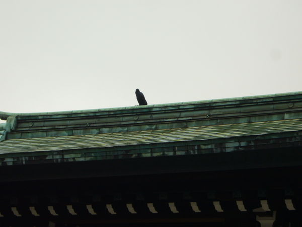 廟宇跟烏鴉(日本烏鴉真的很多)