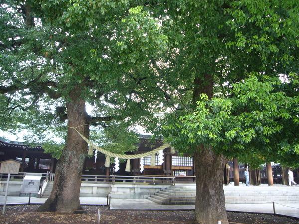 夫妻結緣樹