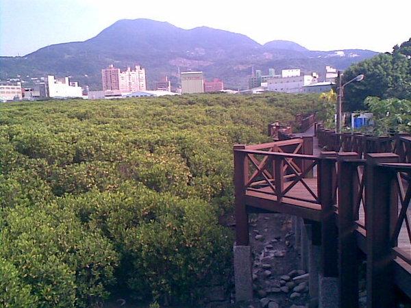 紅樹林&步道