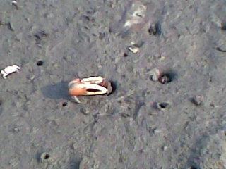 等螃蟹要有耐心