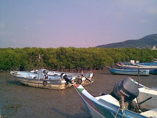 紅樹林與小船