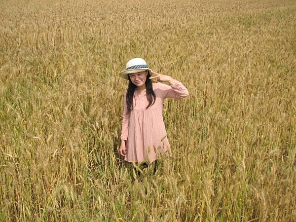 wheat 008