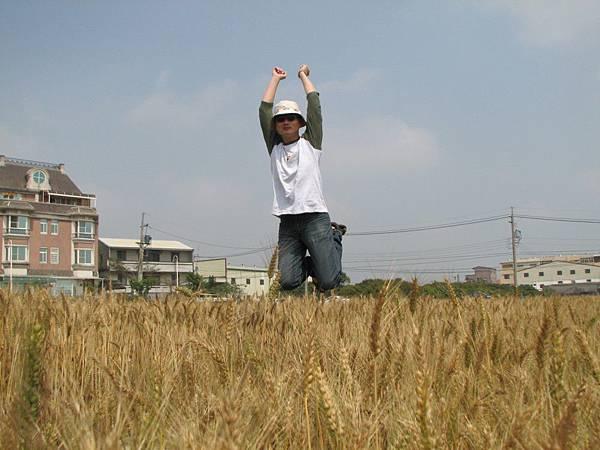 wheat 010