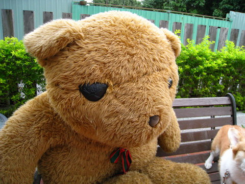 阿窟生日趴牧豬之旅-多力與熊熊 (1).jpg