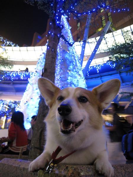 信義區賞聖誕燈 (4).JPG