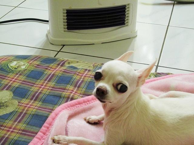 不用躲被窩也能暖暖過冬