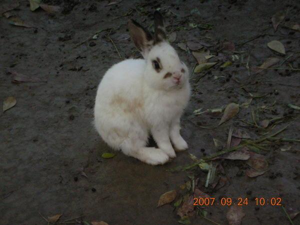 阿蓮農場的小兔子