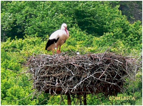 Tokaj_bird.jpg