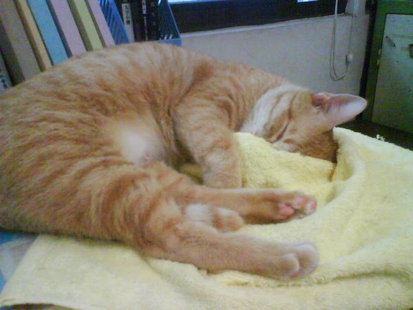 睡覺有毛巾