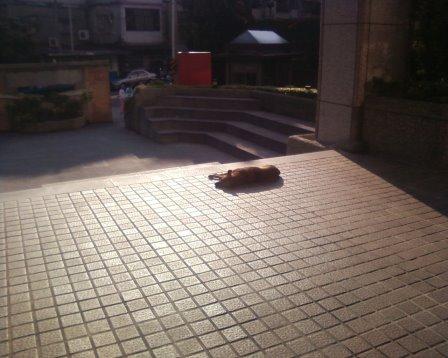 sundog1.jpg