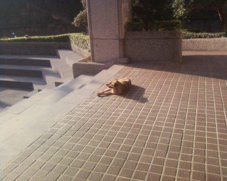 sundog2.jpg