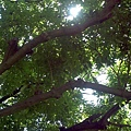2012-07-15_12-36-31_77