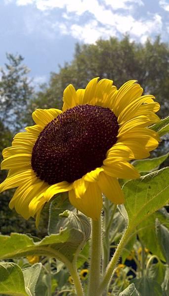 2012-08-06_11-55-09_213
