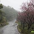 『2012第四屆雙溪櫻花馬拉松,朦朧的櫻花好硬的山路!』 (27)