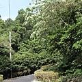 DON1DON-『充滿傳奇故事的跑道,翻山越嶺北宜公路超馬賽』 (5)