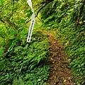 【路線探勘】-『SALOMON X TRAIL RUN 越野路跑,超硬賽道嘗鮮看!』 (3)