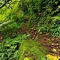 【路線探勘】-『SALOMON X TRAIL RUN 越野路跑,超硬賽道嘗鮮看!』 (4)