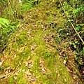 【路線探勘】-『SALOMON X TRAIL RUN 越野路跑,超硬賽道嘗鮮看!』 (8)