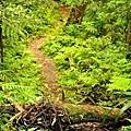【路線探勘】-『SALOMON X TRAIL RUN 越野路跑,超硬賽道嘗鮮看!』 (13)