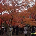 【賽場焦點】-『2012大阪馬拉松(下)- Osaka Marathon Day』 (1)