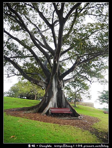 雪梨遊記。皇家植物園。麥里夫人石椅。中式晚餐