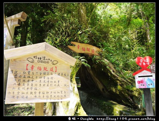 【南投遊記】杉林溪。蝴蝶戲珠花。杜鵑森林步道